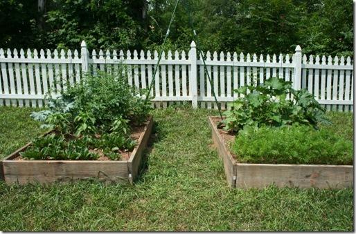 Raised Bed Gardens June Update